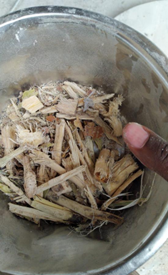 Cassava2